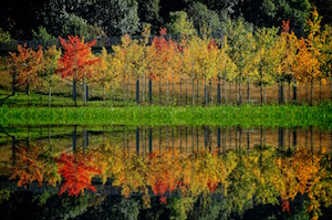 A picture to encourage you to change your investment to be fossil-free - An image of trees reflected in water