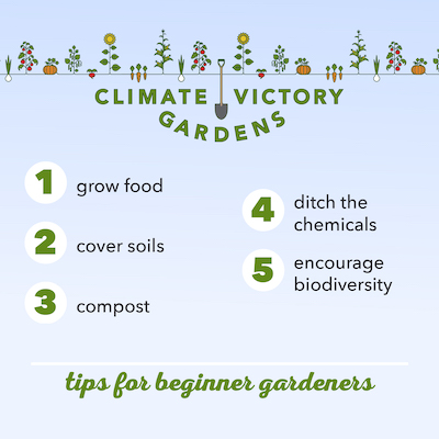 climate victory gardening practices for beginners