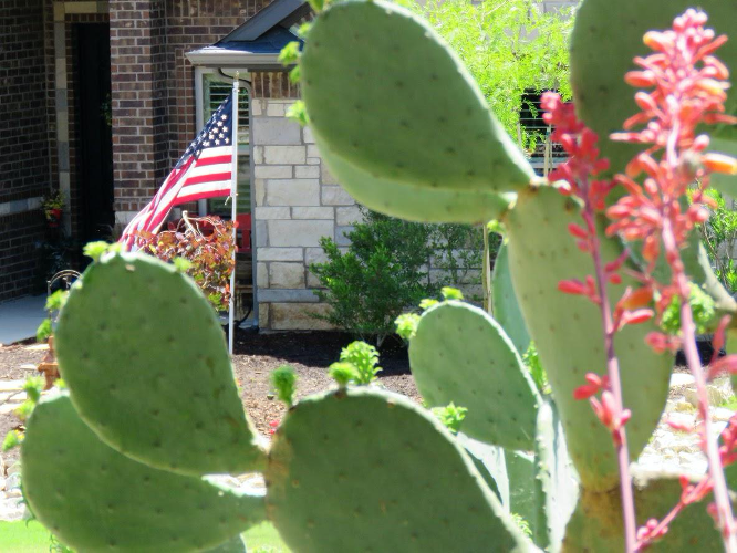 yard with American flag and cacti, death of the American lawn
