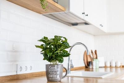 plant in a mug