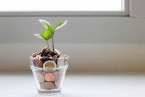 plant growing out of a pot with coins in it