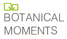 Botanical Moments logo