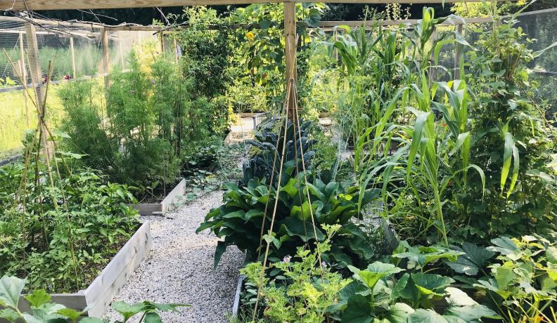 Priscilla Woolworth's Climate Victory Garden