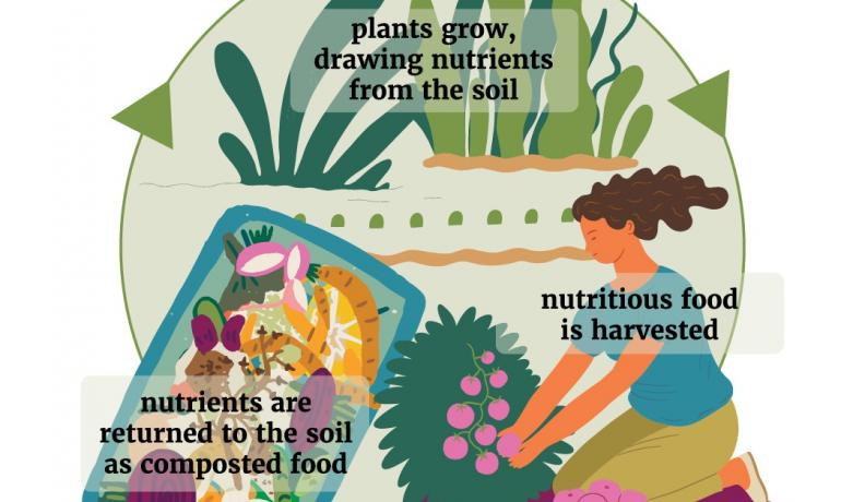 graphic showing the cycle of a regenerative garden