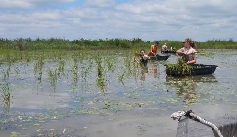seagrass planting event