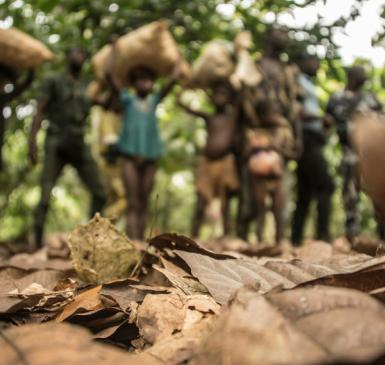 child labor in a cocoa field