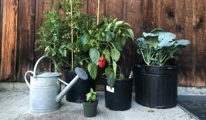 plants growing in plastic pots on a patio