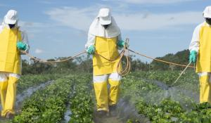 Farmworkers spraying pesticides