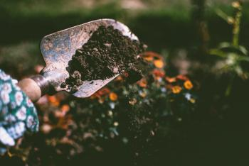 trowel full of healthy soil