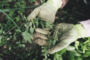 person holding pulled weeds in gloved hands